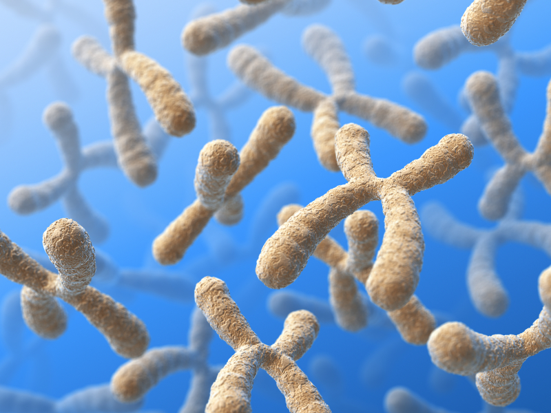 Testing and Supporting Methylation- MTHFR | Functional Medicine Food
